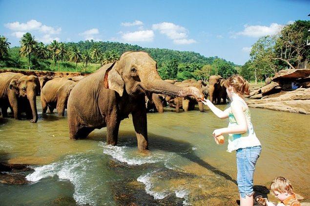 Добро пожаловать в Шри-Ланку!